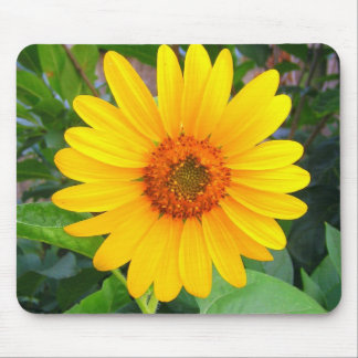 New Sunflower Mouse Pads