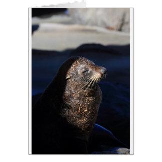 New Zealand fur seal Cape Palliser seal colony Card