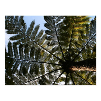 New Zealand Tree Fern Postcard