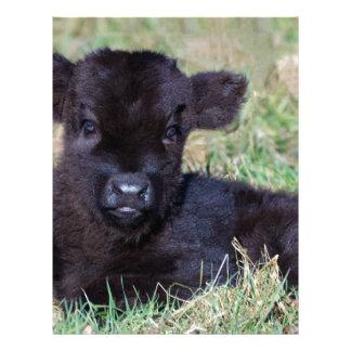 Newborn black scottish highlander calf lying letterhead template