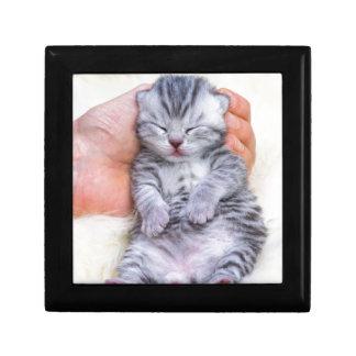 Newborn cat lying sleepy in hand on fur gift box
