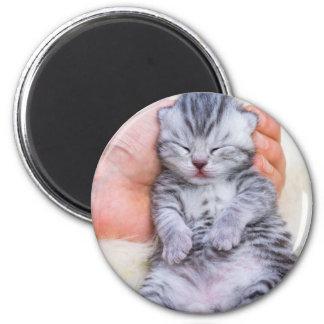Newborn cat lying sleepy in hand on fur magnet