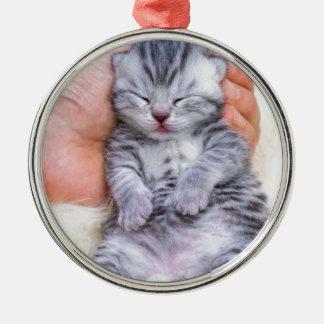 Newborn cat lying sleepy in hand on fur metal ornament