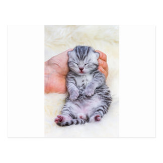 Newborn cat lying sleepy in hand on fur postcard