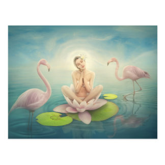 newborn fairy water lilly white light pink postcard