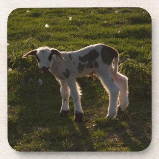 Newborn lamb coaster