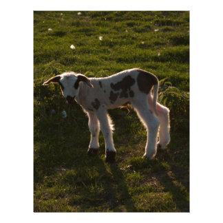 Newborn lamb letterhead
