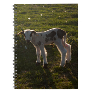 Newborn lamb notebook
