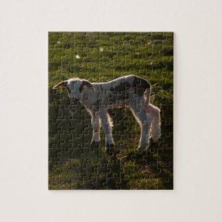 Newborn lamb puzzles