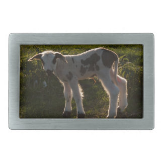 Newborn lamb rectangular belt buckles