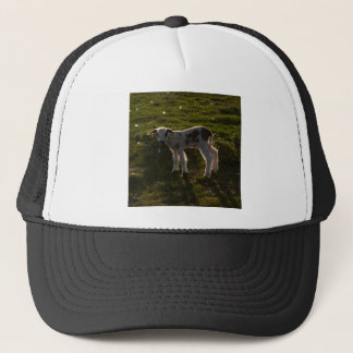 Newborn lamb trucker hat