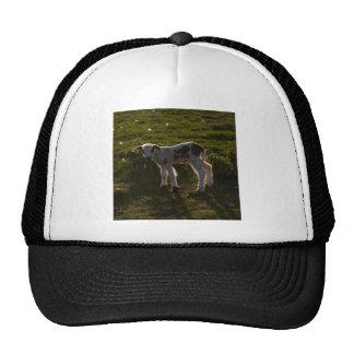 Newborn lamb trucker hat