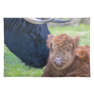 Newborn scottish highlander calf with mother cow placemats