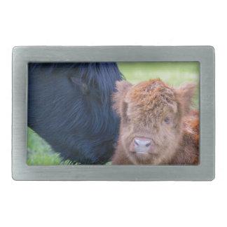 Newborn scottish highlander calf with mother cow rectangular belt buckle