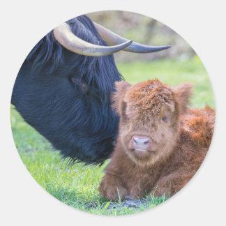 Newborn scottish highlander calf with mother cow round sticker