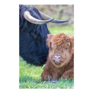 Newborn scottish highlander calf with mother cow stationery
