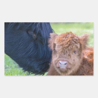 Newborn scottish highlander calf with mother cow sticker