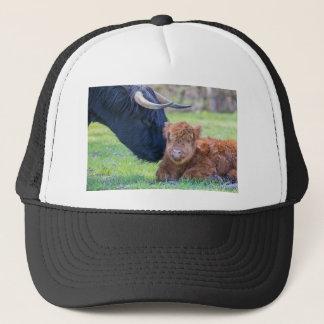 Newborn scottish highlander calf with mother cow trucker hat
