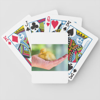 Newborn yellow duckling sitting on hand bicycle playing cards