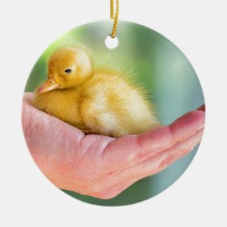 Newborn yellow duckling sitting on hand round ceramic ornament