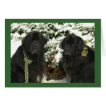 Newfie Christmas Greeting Card