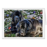 Newfie Holiday Wishes Greeting Card