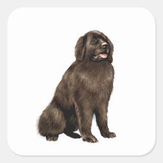 Newfoundland - brown sit square sticker