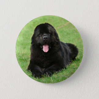 Newfoundland dog 2 inch round button