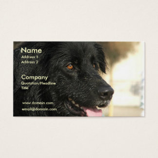 Newfoundland Dog Business Card