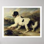Newfoundland Dog Called Lion, 1824 (oil on canvas) Poster