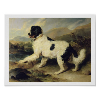 Newfoundland Dog Called Lion, 1824 (oil on canvas) Poster