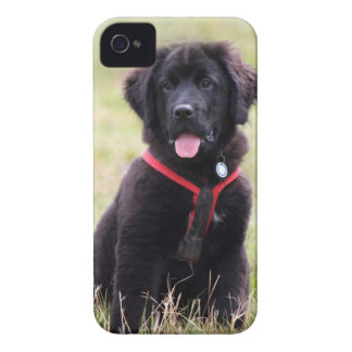 Newfoundland dog puppy cute beautiful photo, gift iPhone 4 Case-Mate cases
