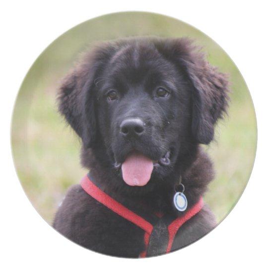 Newfoundland dog puppy cute beautiful photo, gift plate