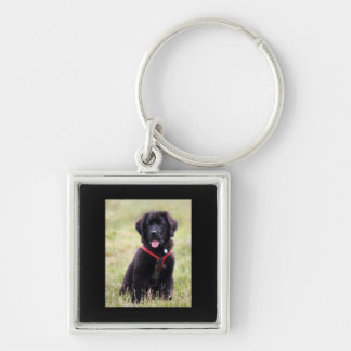 Newfoundland dog puppy cute photo, gift keychain