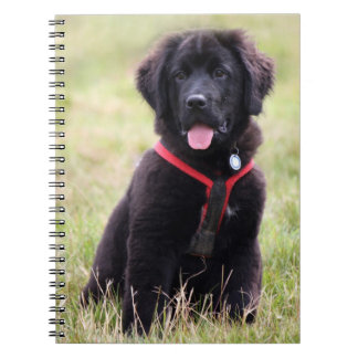 Newfoundland dog puppy cute photo, gift notebook