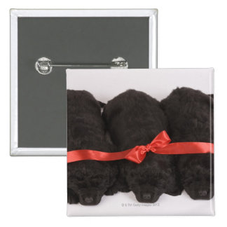 Newfoundland Puppies sleeping (Canis 2 Inch Square Button