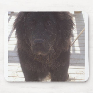 Newfoundland_puppy_muddy Mouse Pad