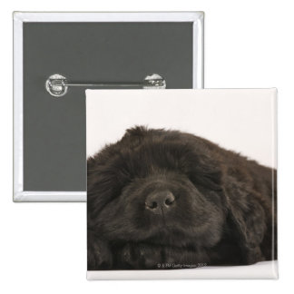 Newfoundland Puppy sleeping (Canis familiaris). 2 Inch Square Button