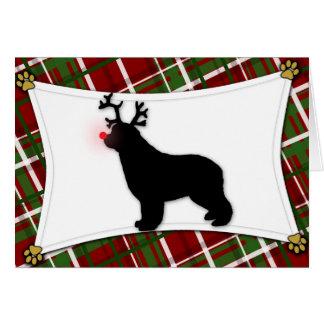 Newfoundland Reindeer Christmas Card