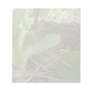 Newly Built but Empty Bird Nest in a Mulberry Tree Notepad
