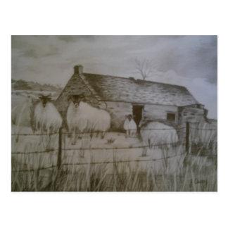 Newtowncrommelin Sheep, County Antrim, Northern Ir Postcard