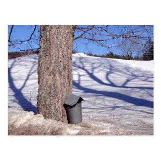 NH Maple Sugar Sap Buckets in snow Postcard