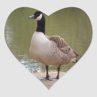 Nice Bird & Pool Heart Sticker