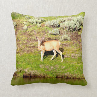 Nice Buck Deer in Velvet Photo Throw Pillow