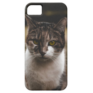 Nice cat marries iPhone 5 covers