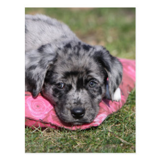 Nice half-breed puppy postcard