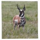 Nice Pronghorn in a green field. Napkin