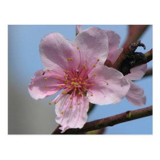 Nice Raspberry Bloom Postcard