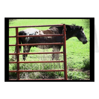 """Nick"" Appaloosa Horse Card"