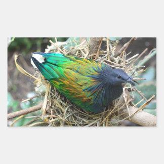 Nicobar Pigeon on Nest Sticker